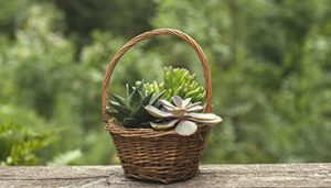 Spring Succulent Basket @ Miramar Vineyards