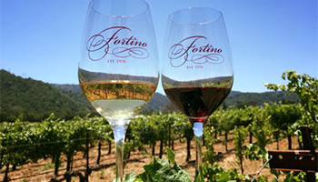 Fortino Winery white and red wine in wine glasses with a vineyard in the background